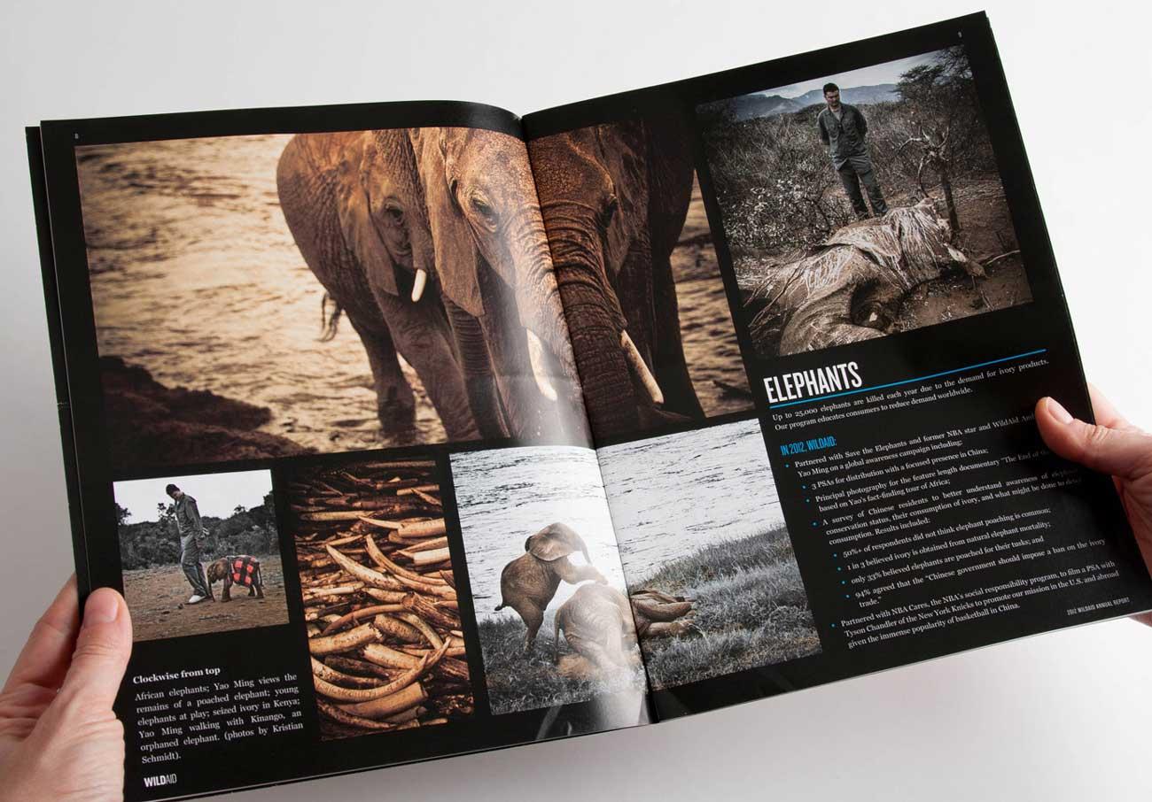 Wild Aid Elephants